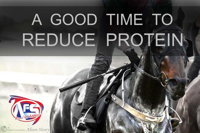 Animal Feed Solutions A Good Time To Reduce Protein